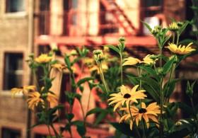 Modernios gėlės